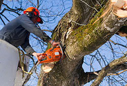 Tree Removal Services in westcovina