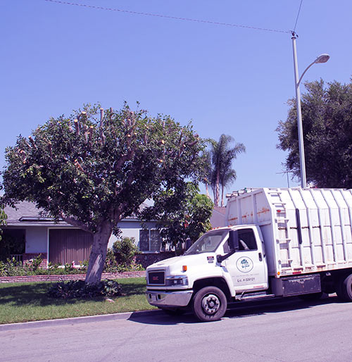 cortez tree service and landscape company