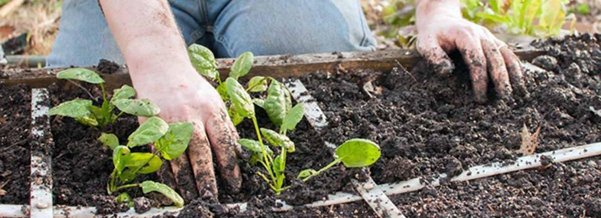 Landscape & Gardening services in westcovina