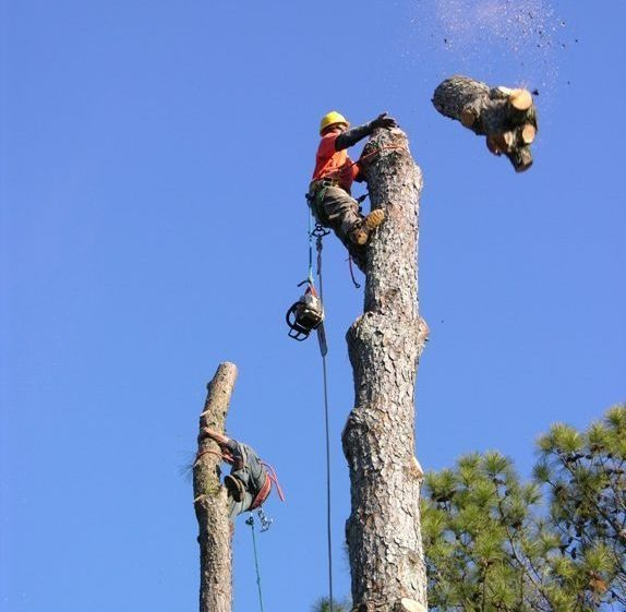 Tree Removal, stump grinding and root removal Services in westcovina